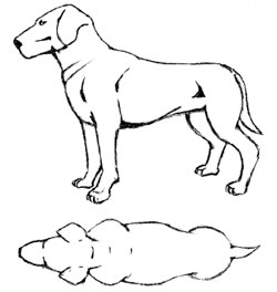 Sketch of ideal weight dog, no ribs showing and not too much fat