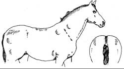 Horse in condition score: 5 very fat condition