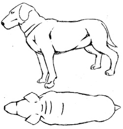 Sketch of overweight dog with some rolls of fat around neck and no definition in body