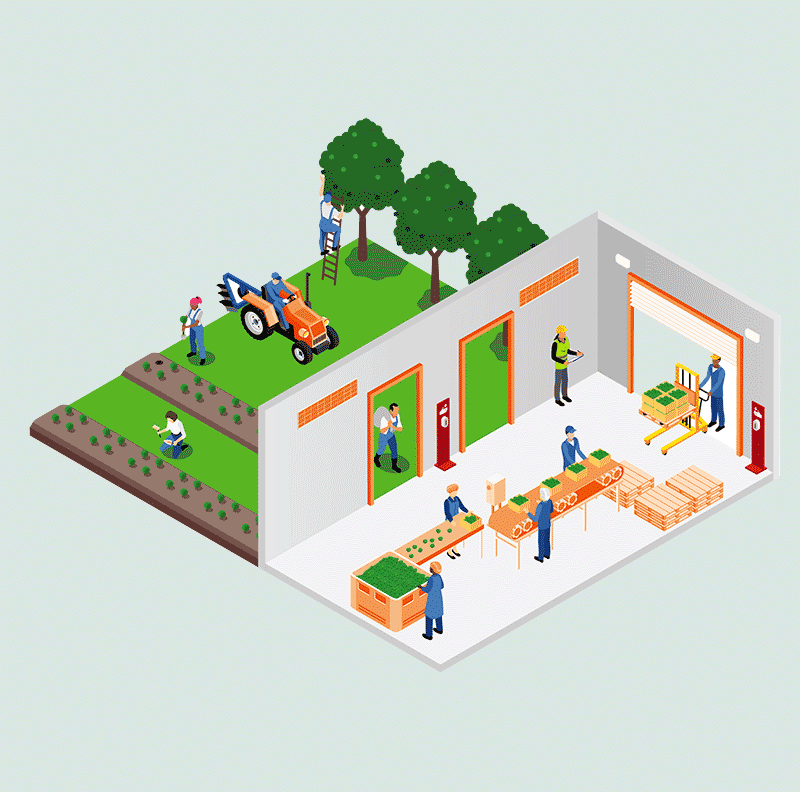 Graphic showing outdoor work on a farm, driving tractors, picking fruit and vegetables. The other half of the graphic shows inside work on a farm in a packing shed, lifting and sorting