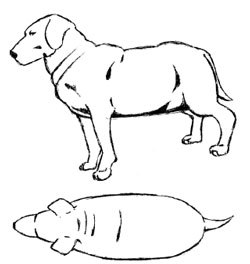 Sketch of obese dog with no body definition and rolls at neck and back