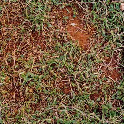 Soil with 50% groundcover