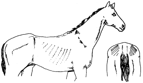 Diagram of horse in moderate condition, described in text to follow