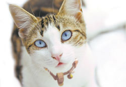 Close up photo of cat with collar and bell