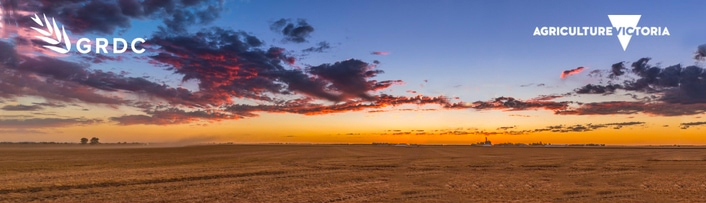 Field at sunrise Grains Research Development Corporation and Agriculture Victoria logos overlayed