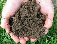 Hands holding soil underneath green grass