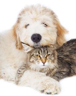 Dog and cat snuggled together
