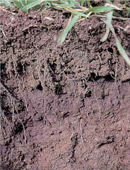 Cross-section of soil with a crumbly texture and many root paths