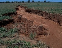 Deep furrow in field with rich red soil showing