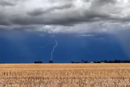 Field of crops with grey thunderous sky with lightening overhead
