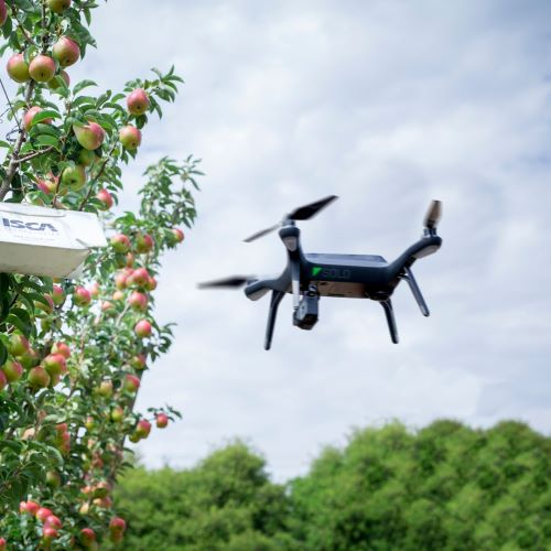 An airborne drone inspecting fruit trees