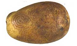 Potato with concentric ring patterns visible on the skin