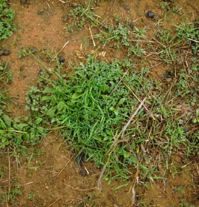 Soil with 40% groundcover