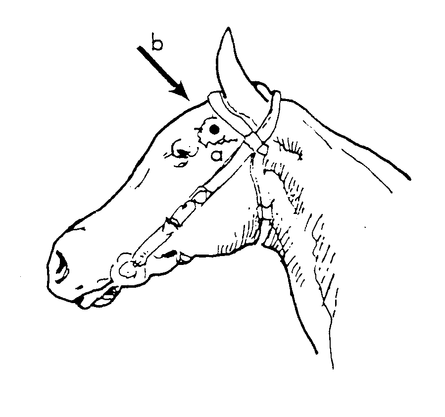 Diagram of a horse head showing the correct angles for the frontal method and temporal method of humane destruction