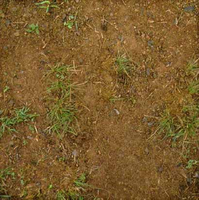 Soil with 20% groundcover