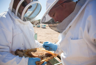 2 people in beekeeper gear looking at a frame