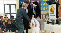 Pet Educator showing kindergarten students how to touch the dog
