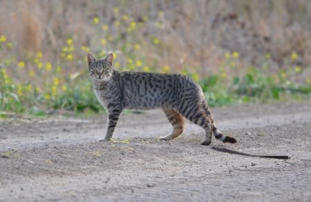 Feral cat standing on dirt road