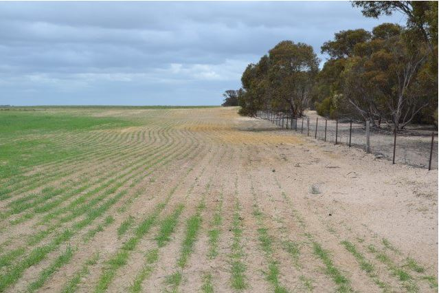 Large pasture field, elevated view, green crops on left side, eroded, sandy soil on right side